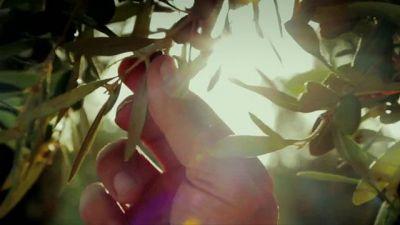Yeşil Deniz 1. Sezon 1. Bölüm 1. Fragman