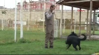 Özel Eğitimli Köpek 'kayra', Uyuşturucu Kaçakçılarına Geçit Vermiyor