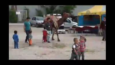 """""""Mecnun"""" deve, susuzluğunu hortumla gideriyor - KAHRAMANMARA"""