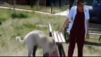 Eğri Bacaklı Kedi Ve Köpeklere Estetik Operasyon