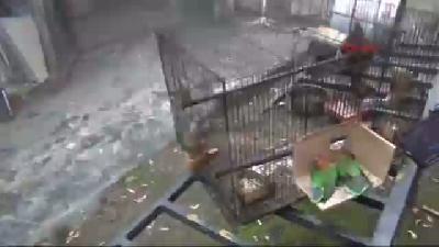 Atölyedeki Yangında 2 Papağan Telef Oldu, Köpek Kurtuldu