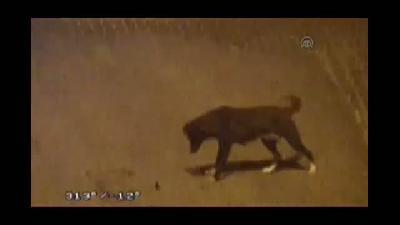 Köpeğin fareyle oyunu MOBESE kamerasında - SAKARYA