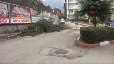 Tokat'ta Ağaç Kesimine Tepki