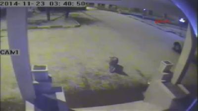Kurtlar Posof'a İndi, Güvenlik Kamerası Görüntüledi