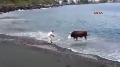 Kurbanlık Boğa Denize Kaçtı, 2 Kişiyi Yaraladı