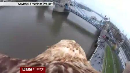 Şah Kartalı Darchan'ın gözünden kuş bakışı Londra