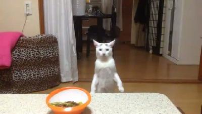MoonWalk Dansı Yapmasının Yanında Emrah Kaşlarına da Sahip Çok İlginç Bir kedi