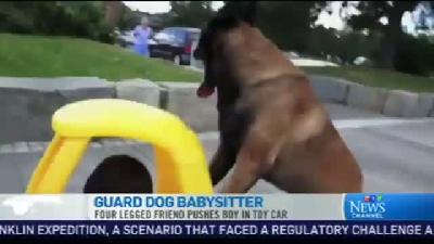 Bekçi Köpek Eto Böyle Bebek Bakıcısı Oldu