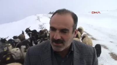 Kardan Kapanan Yolda Mahsur Kalan Çobanlar Ve 7(fotoğraflı)(fotoğraflı) Hayvan Kurtarıldı
