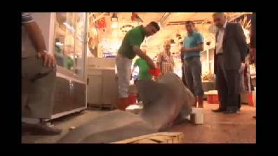 3,63 metrelik köpek balığı, vatandaşların ilgi odağı oldu - BURSA