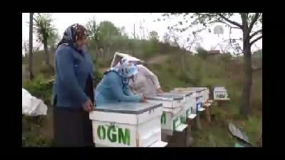 Köy kadınları kestane balı üretecek - SAMSUN