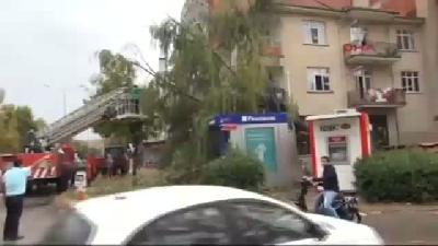 Edirne'de Fırtına Ağaçları Devirdi-2
