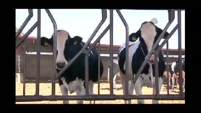Besilik hayvan ithalatına üreticiden olumlu tepki - KONYA
