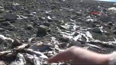 Keban Baraj Gölü'nde Balık Ölümlerine İnceleme